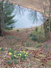 Visitation_Falls_Dry_Daffodils 2
